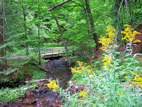 Golden Rod near Munising Falls