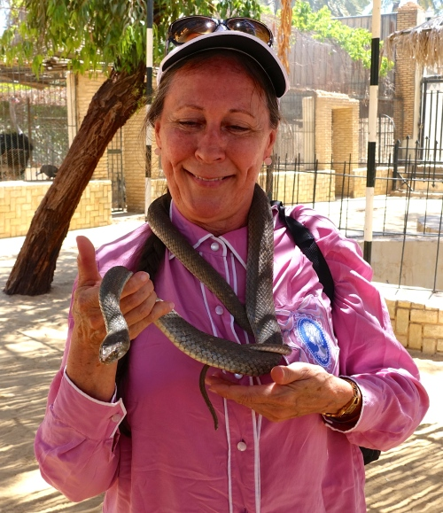 Holding snake at Tunisian zoo