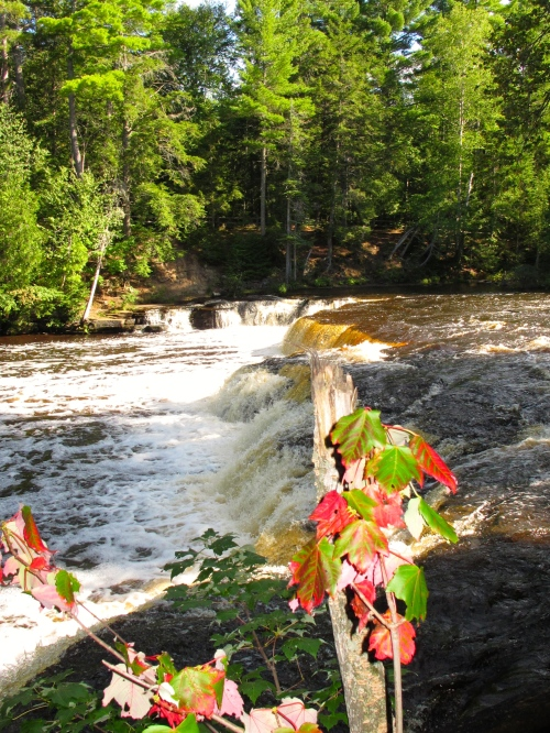 Maple leaves turning at Tahquamenon Falls