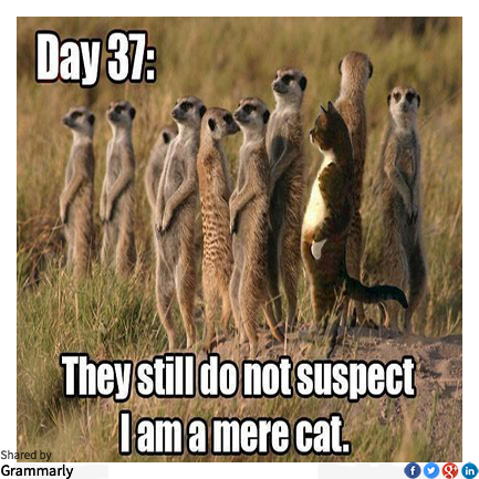Mere Cats