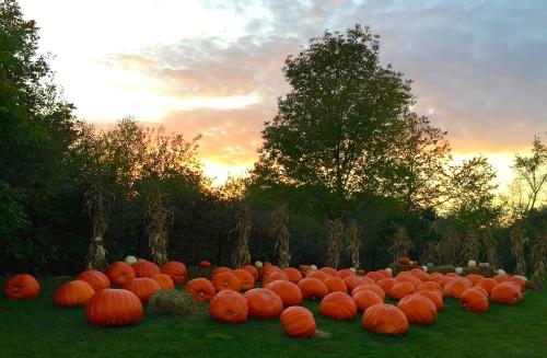 Pumpkins at Meijer Garden 10.15