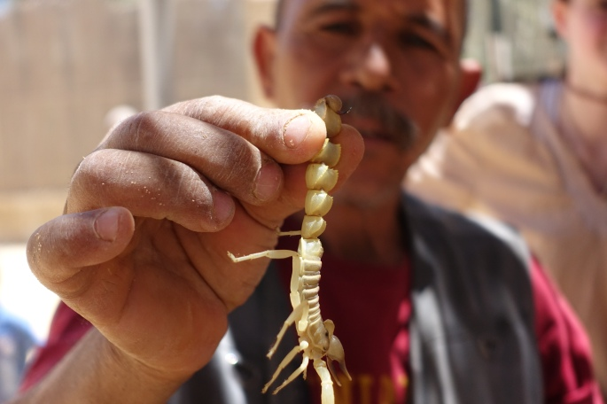 Scorpion being held at a Tunisian Zoo