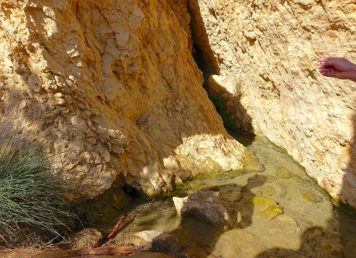 Source of Spring in Tunisia