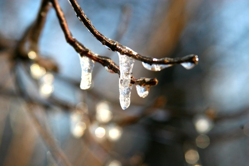 Frozen tears on limbs