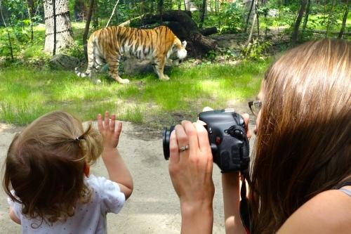 John Ball Zoo Baby watching Tigert