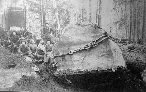 Lumbering in 1880's