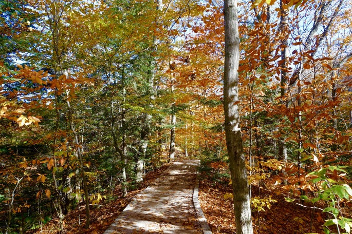 Rosy Mound Park 10