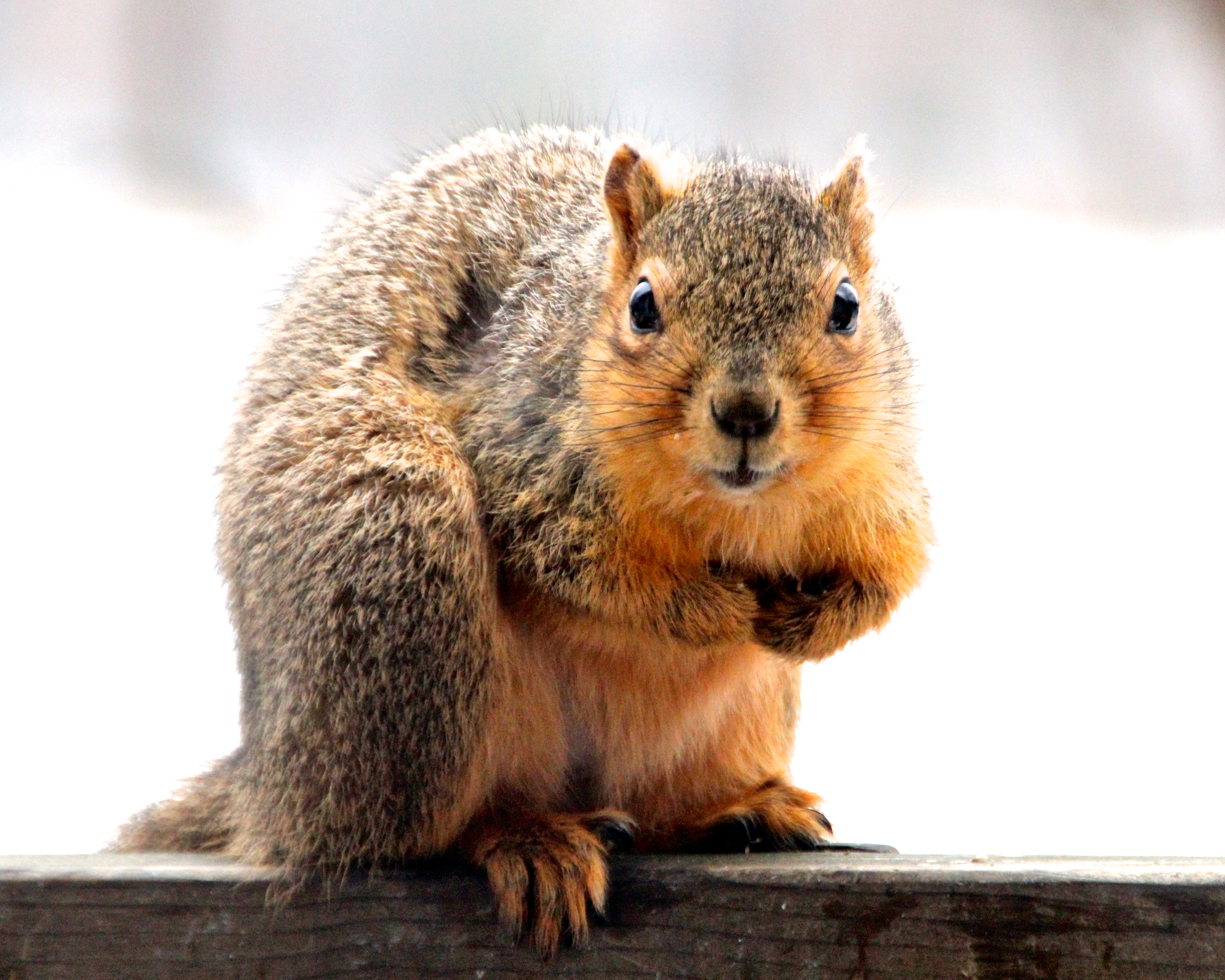 Squirrel on our railingJPG
