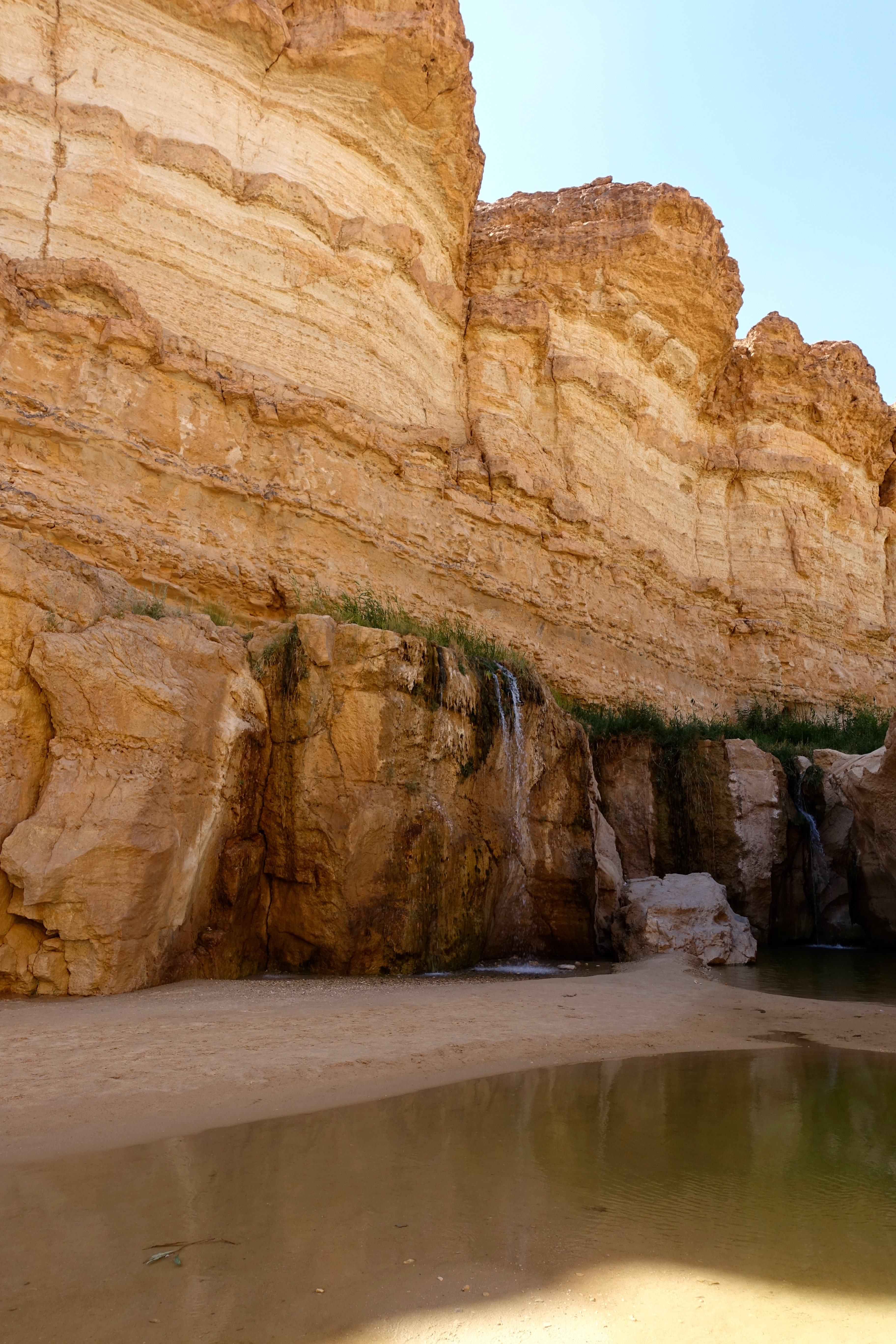 Oasis in Tunisian Desert   Summer Setting