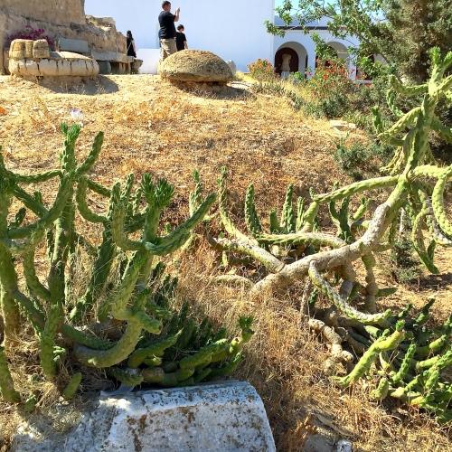 Cactus in Gardens