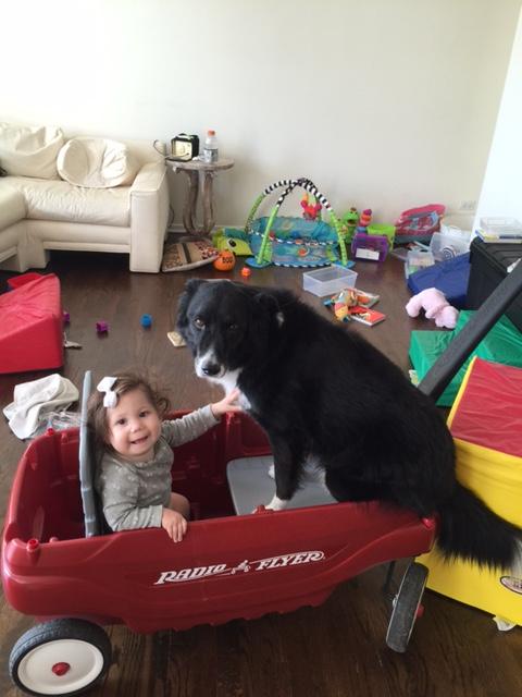 Doggy aboard!