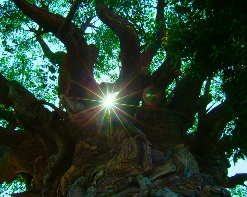 Sun rising behind tree