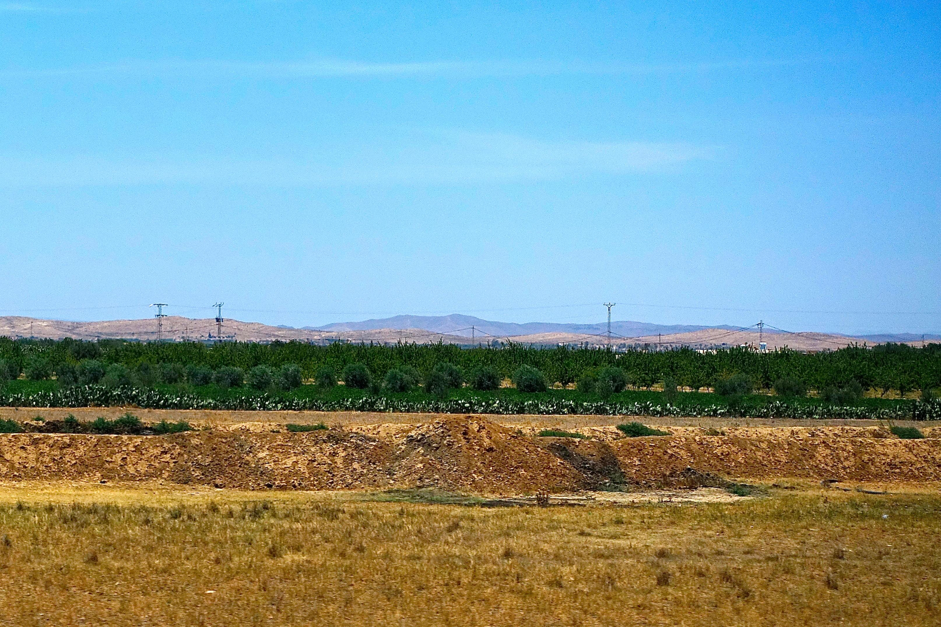 Tunisia. Cactus Fences