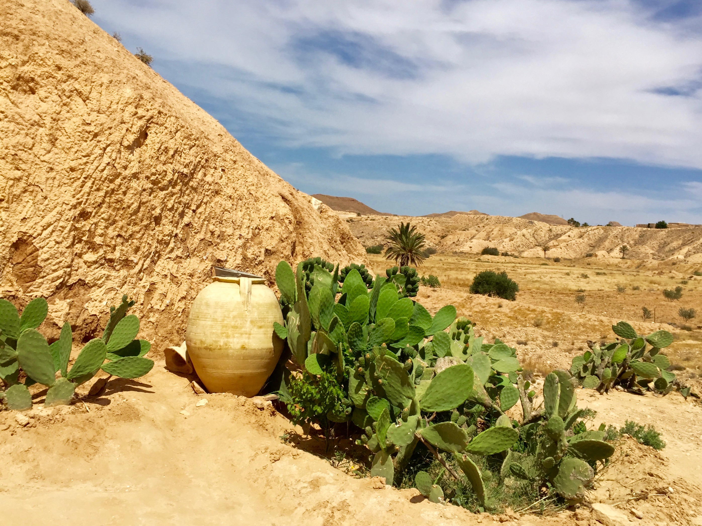 Tunisian Cactus and pot