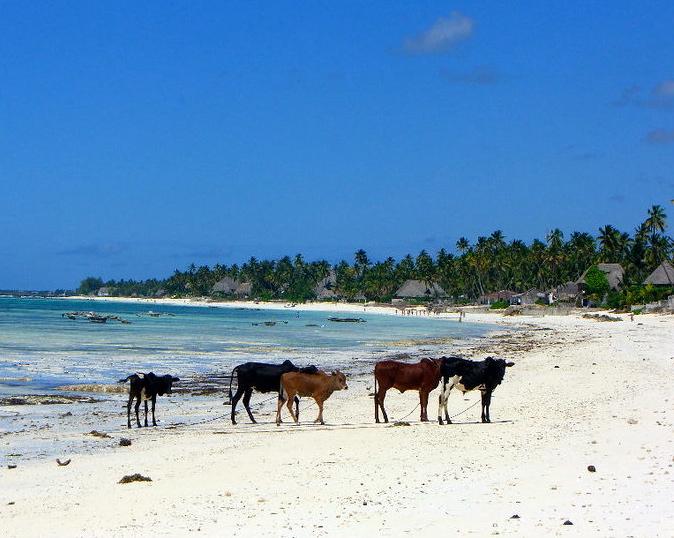 African beach!