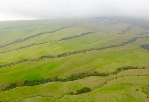 Big Island. Changing ecosystems
