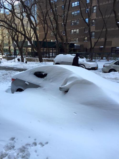 Cars buried under snow on Jan. 24, 2016 NYC blizzard