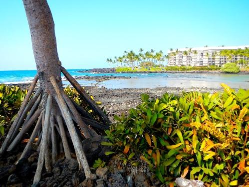 Coastal Hawaii