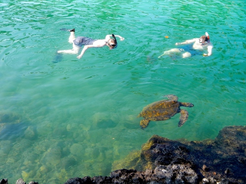Snorkling with green sea turtle in Hawaii