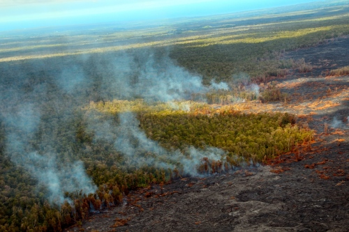 Trees burning from lava flow. Mt. Kilauea 2