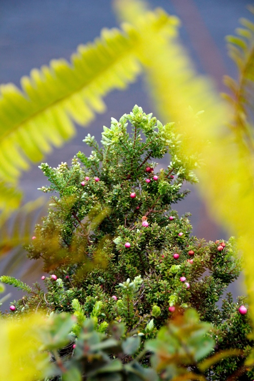 Vegetation Returning above Kilauea Kik Crater