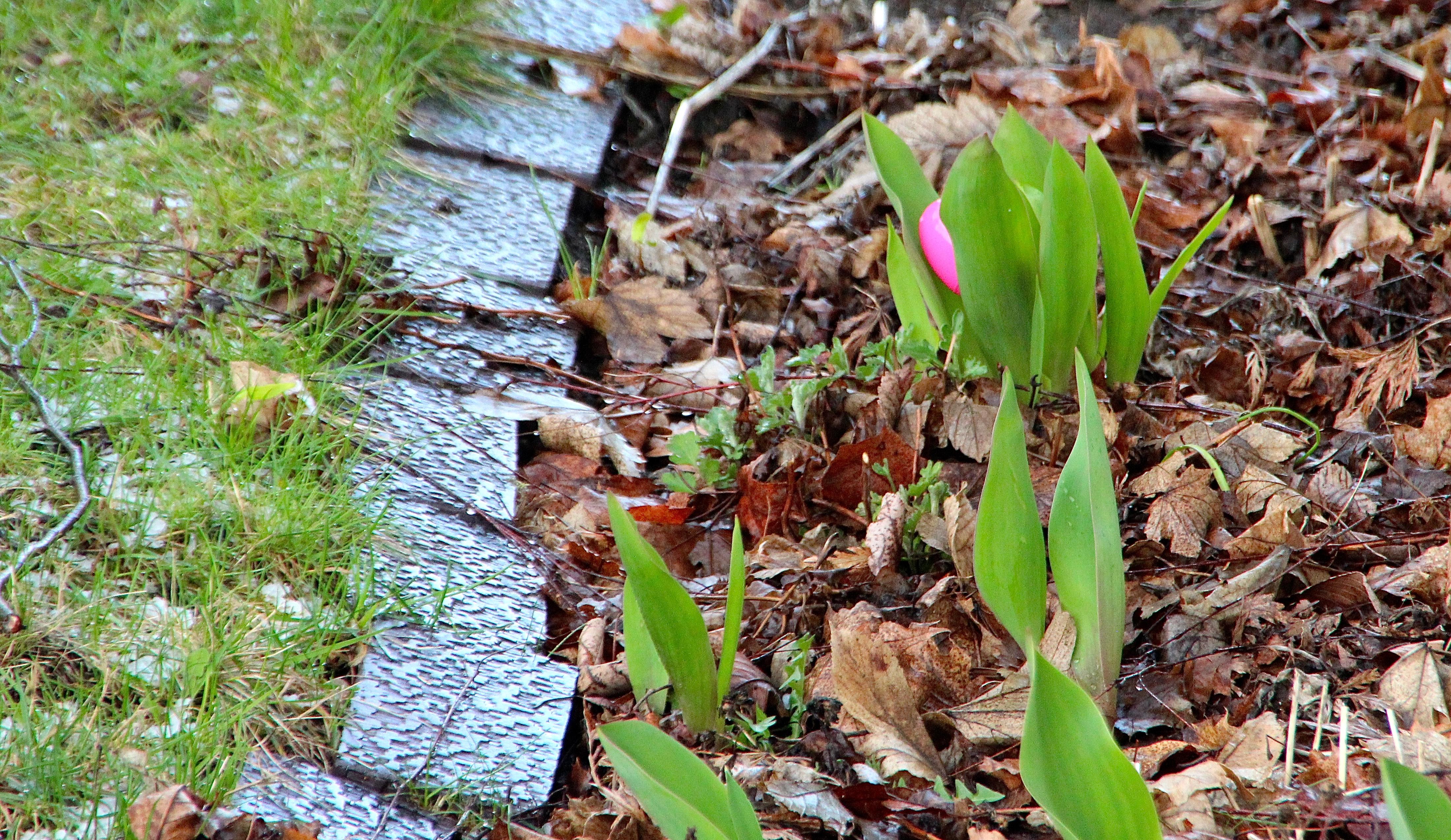 Easter egg in garden