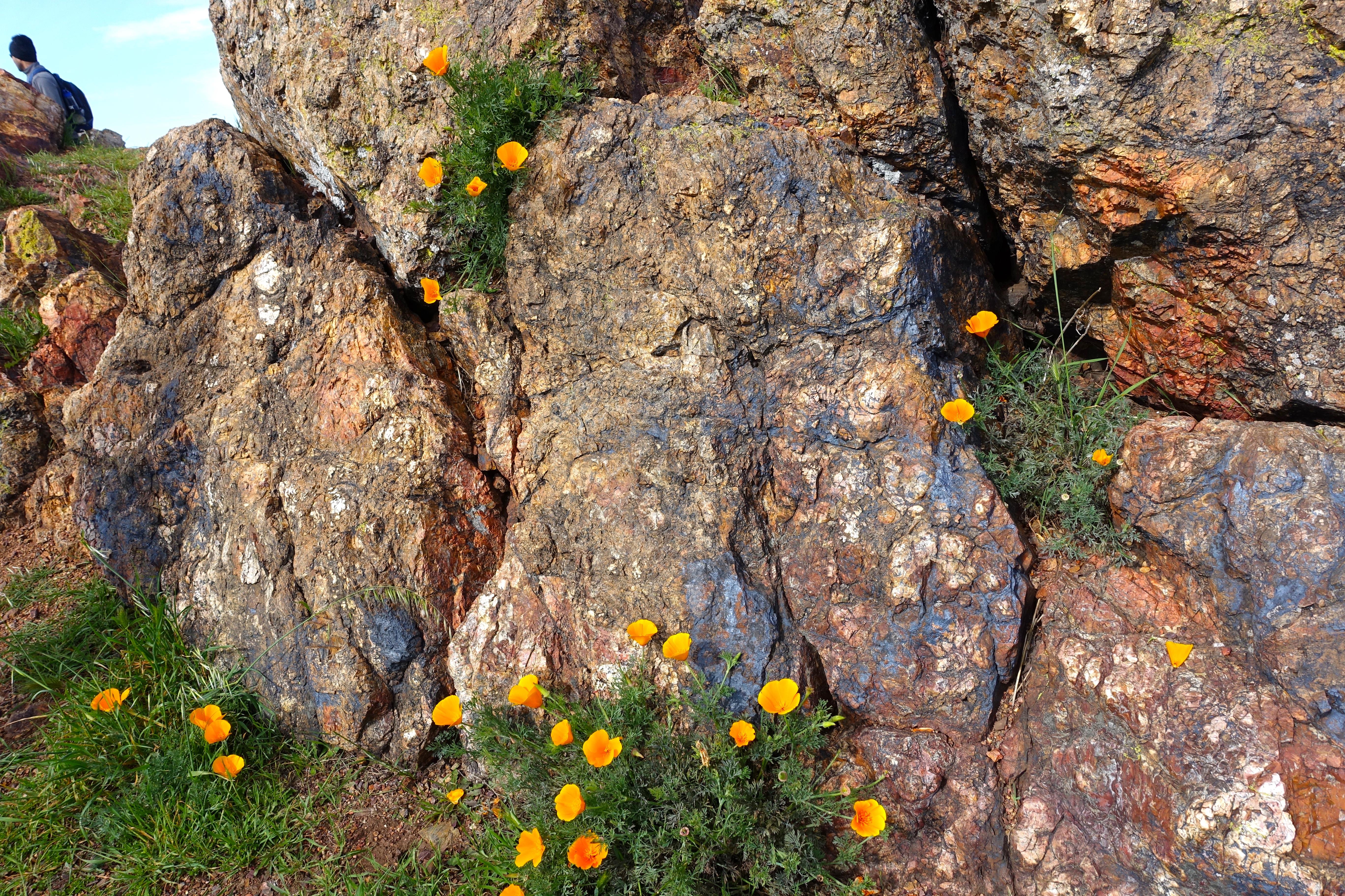 Greenstone in Coyote Hills Regional Park