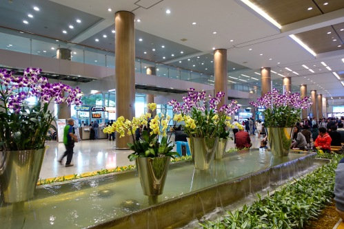Orchids lining Incheon Internation Airport