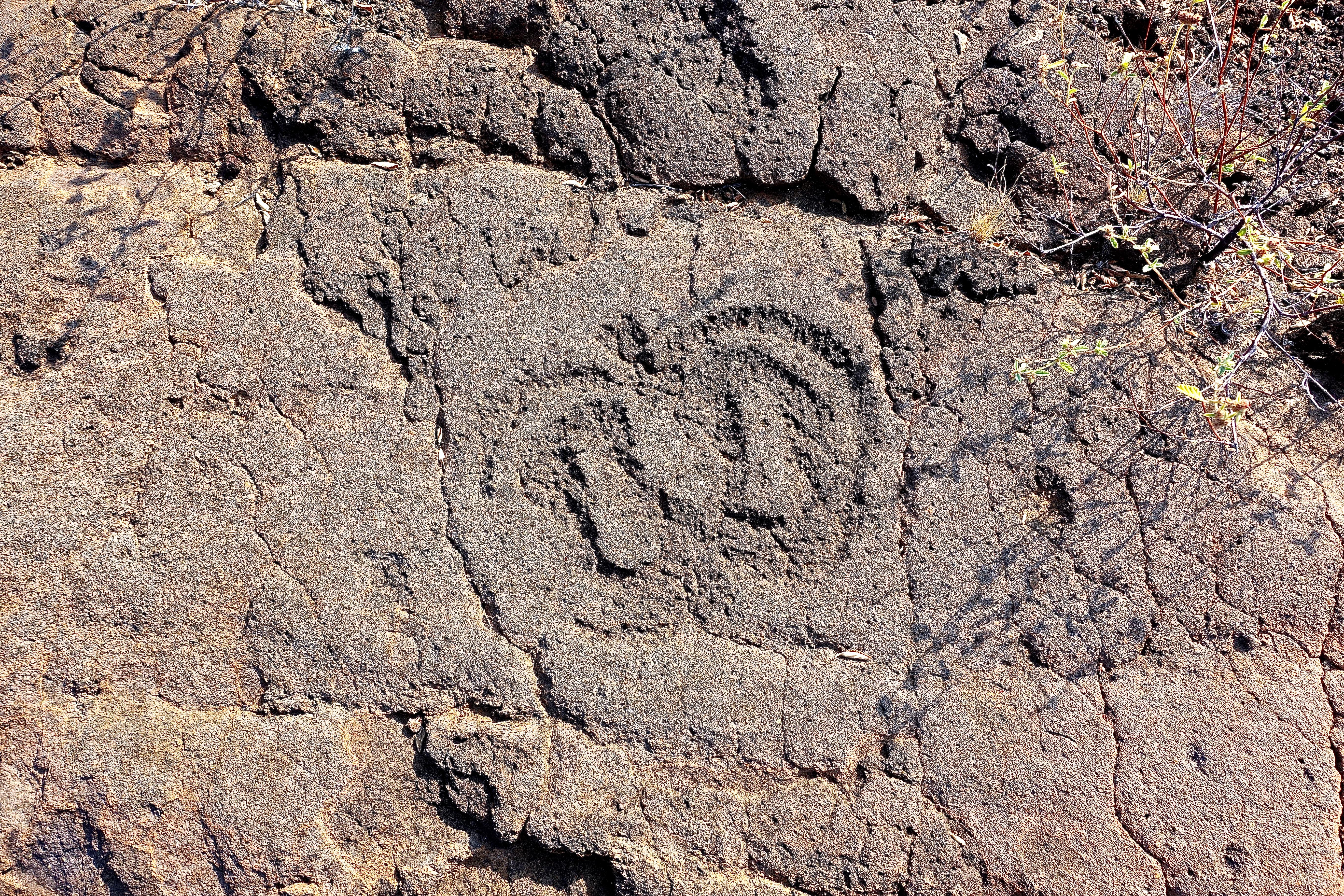 Petroglyph field near Waikoloa 4