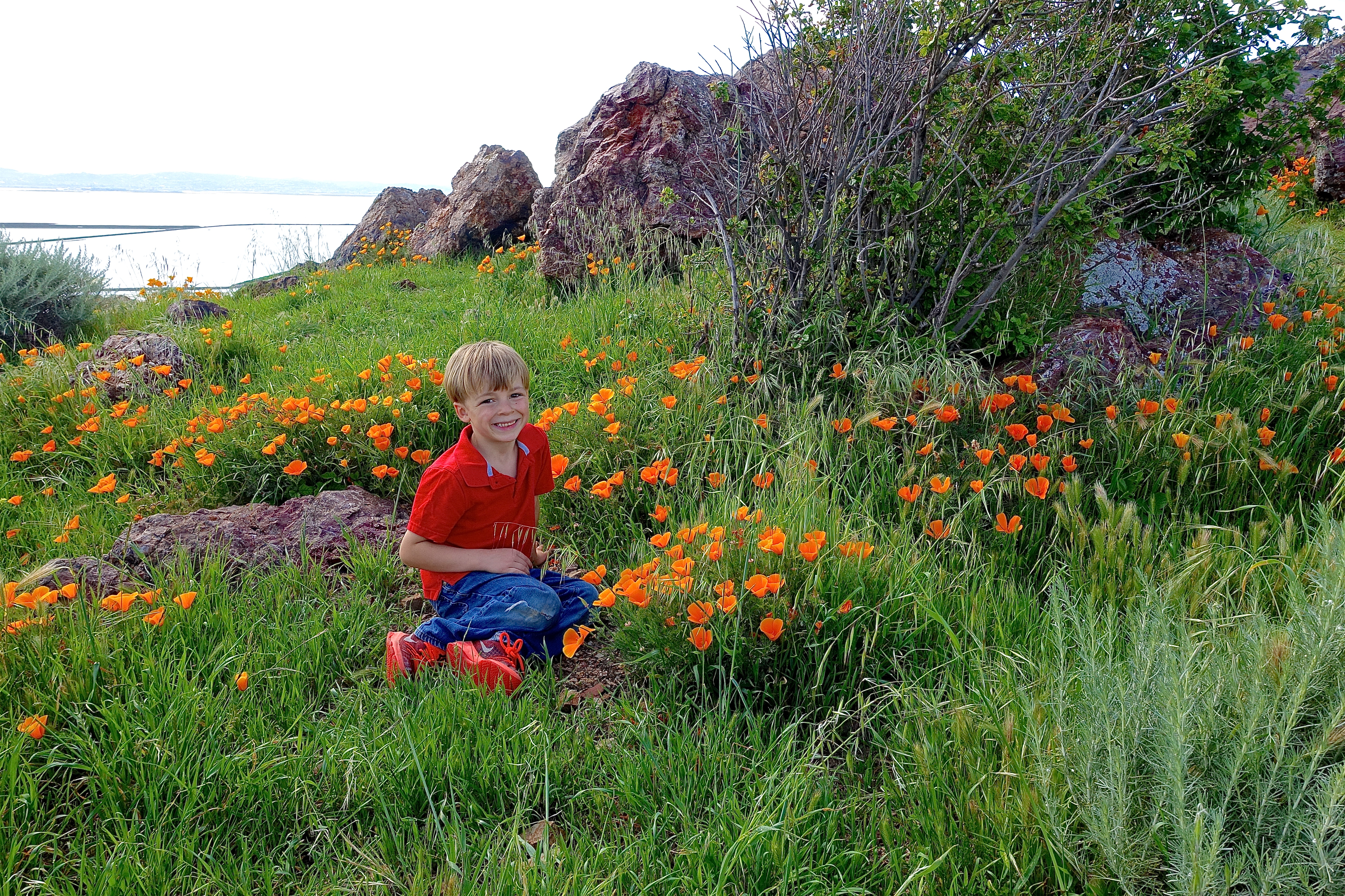 Poppies in Coyote Hills Regional Park