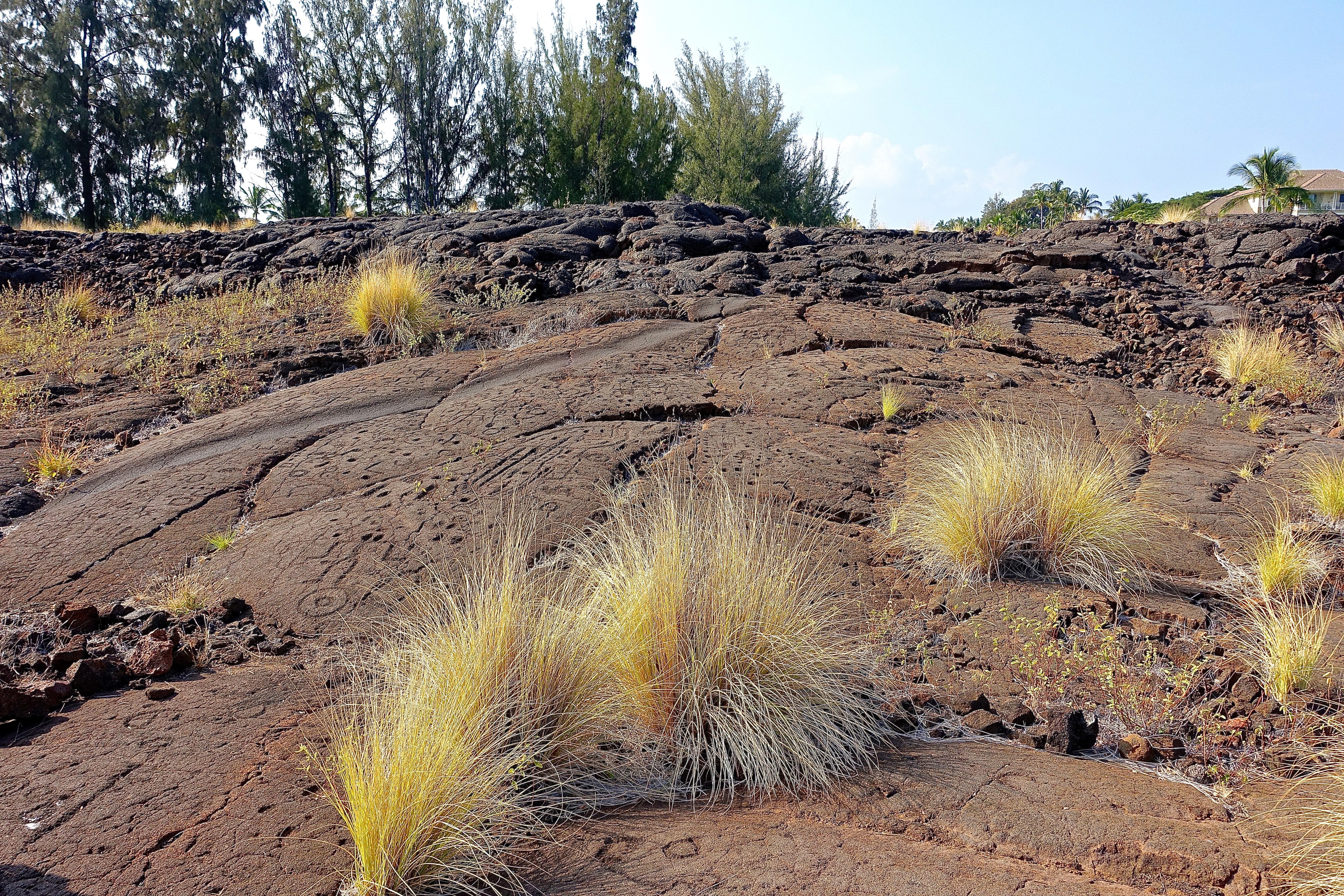 Thousands of petroglyphs. Petroglyph field near Waikoloa