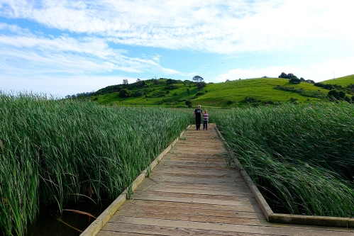 Wetlands in Coyote Hills Regional Park