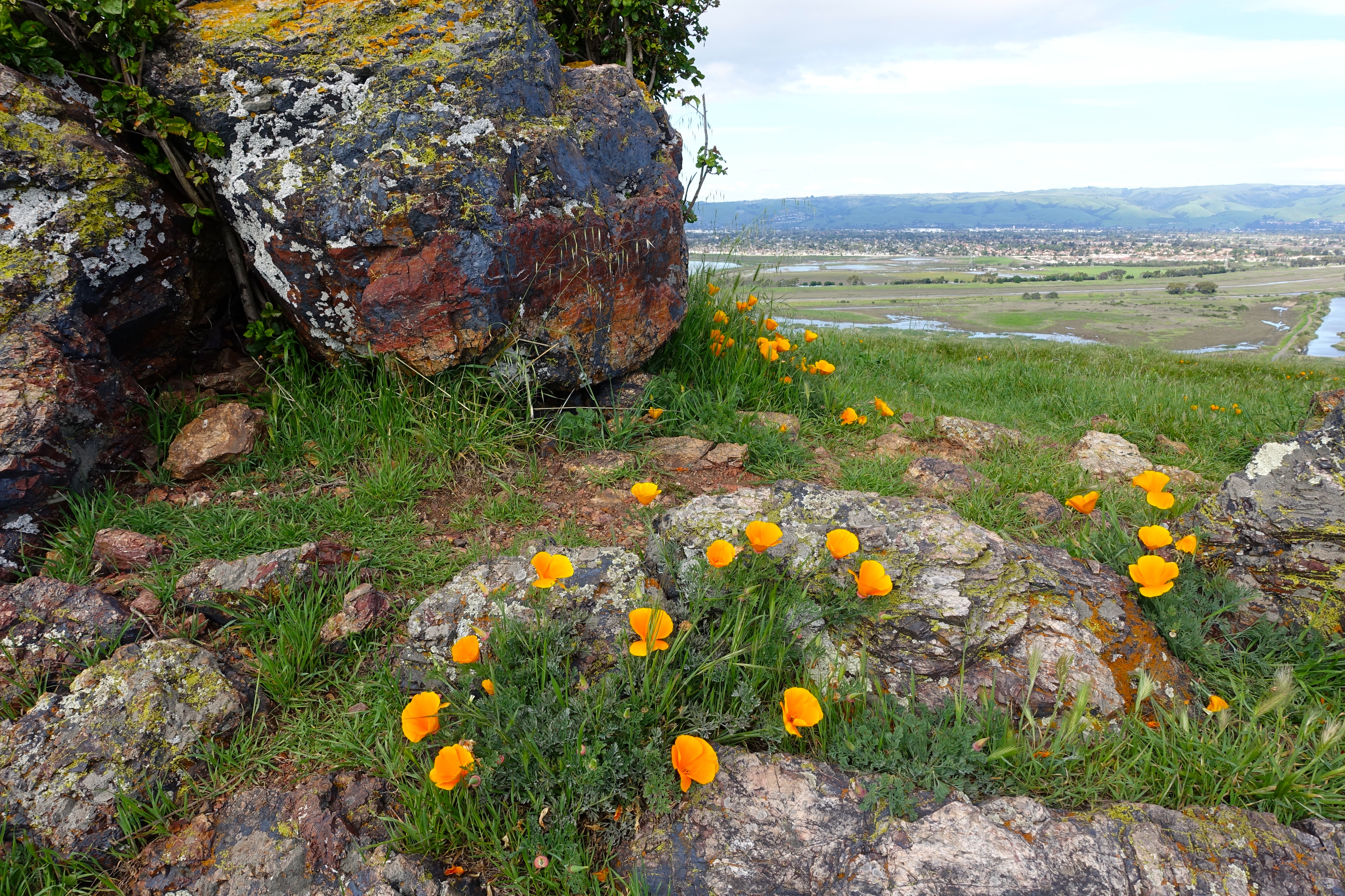 Wildflowers and vibrant rock formations. Coyote Hills Regional Park
