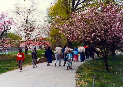 Cherry Blossom Festival with Family 1988