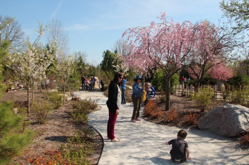 Cherry Blossom Time at Meijer Garden