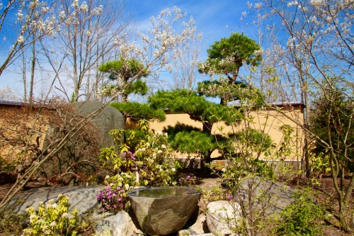 Japanese Garden Early Spring at Meijer Garden