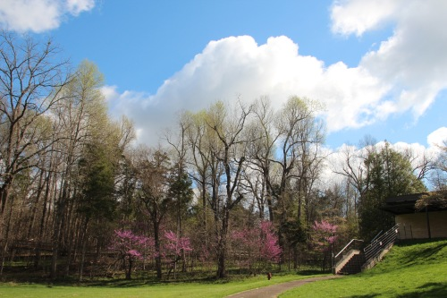 Redbuds in bloom at Abraham Lincoln Birthplace National Historical Park