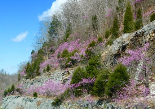 Springtime in Kentucky 1-65