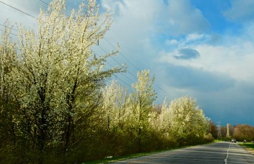 Springtime in Kentucky 1