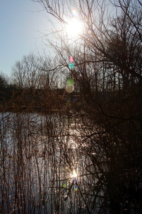 Sun reflecting off lake