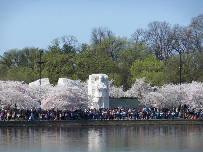 Washington D.C. Naitonal Cherry Blossom Festival 2