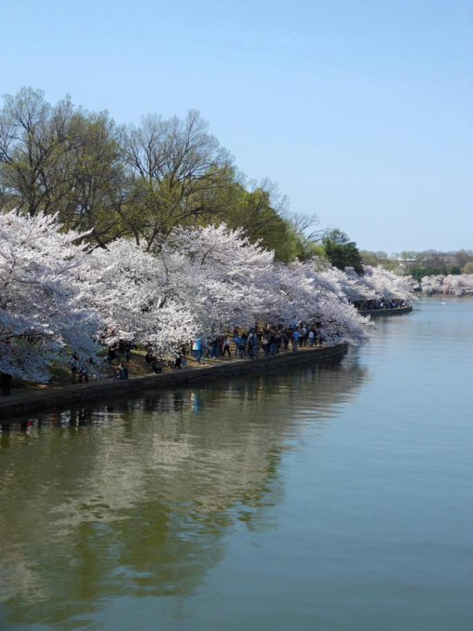 Washington D.C. Naitonal Cherry Blossom Festival