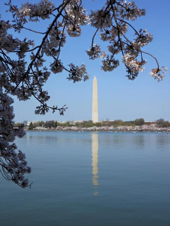 Washington Monument. Cherry Blossom Festival