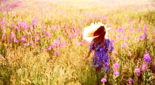Wildflower 1