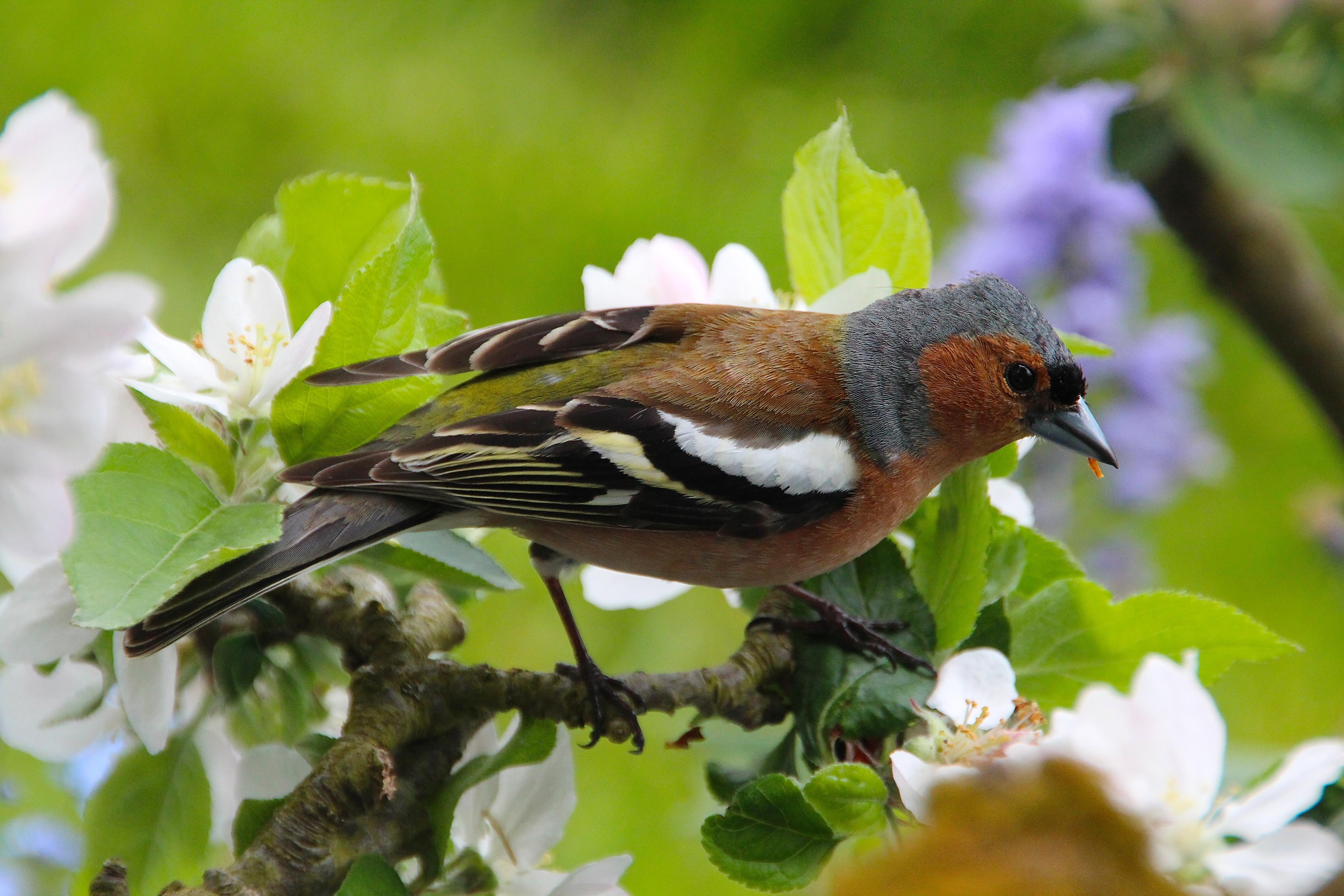Bird at Giverny. France. 05.09.16