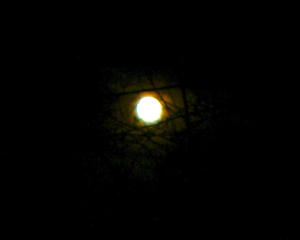 Full Moon Seen through brambles