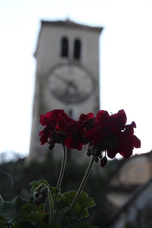 Geraniiums in front of Clock Tower