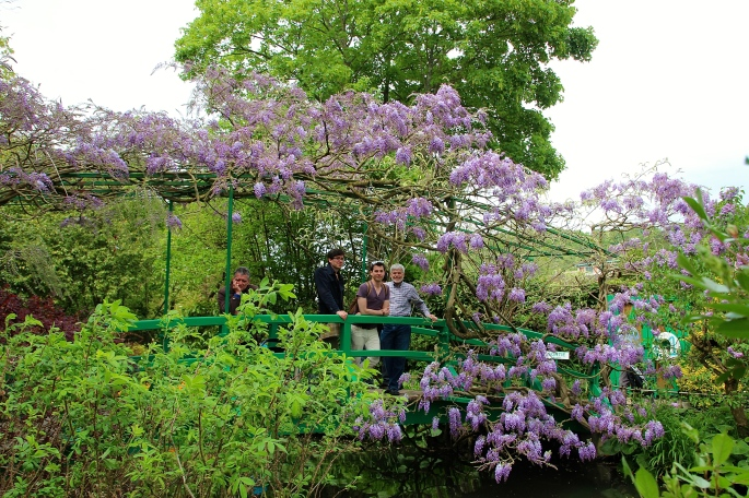 Japanese Bridge lush with wisteria at Giverny. France. 05.09.16