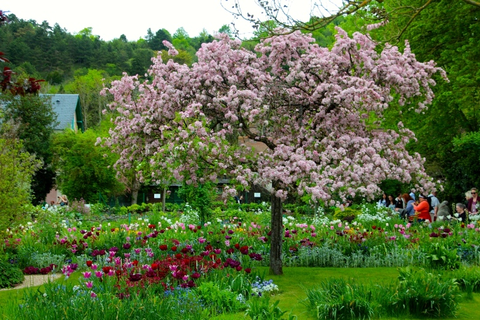 Spring flowers blooming at Giverny. France. 05.09.16. 1