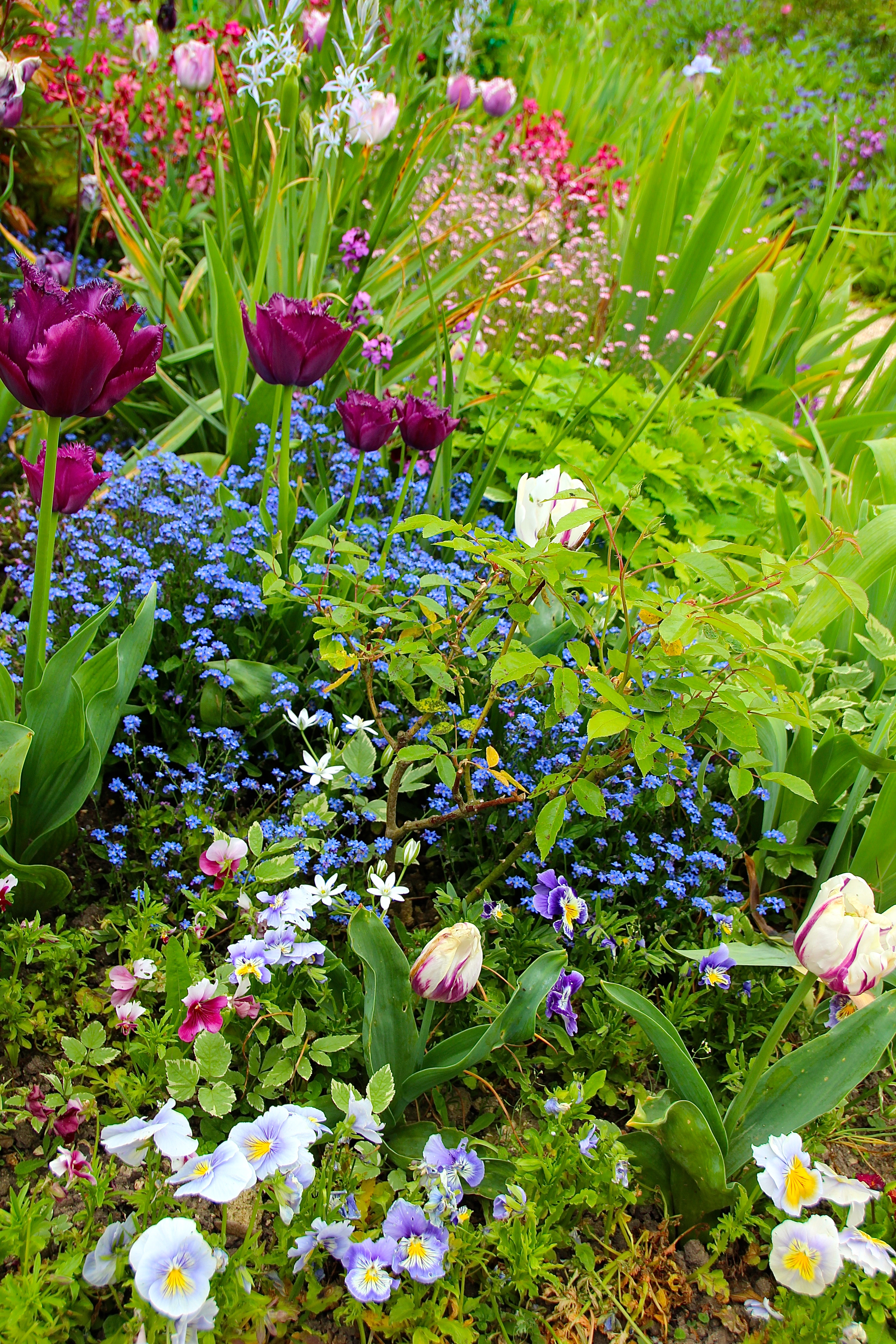 Spring flowers blooming at Giverny. France. 05.09.16. 10